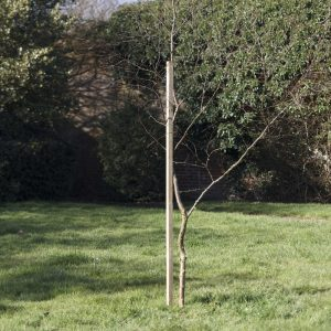 grange dahlia stake
